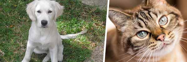 pet owner mailing list
